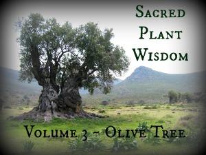 Olive_tree_4