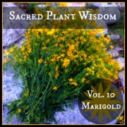Vol 10: Mountain Marigold