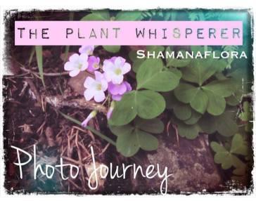 plantwhisperer button