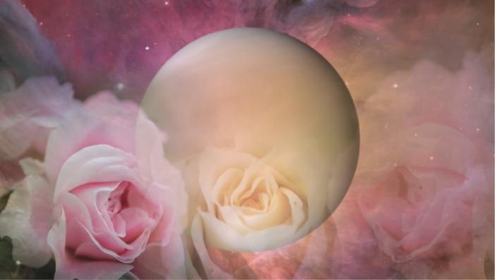 VENUS-ROSE.jpg
